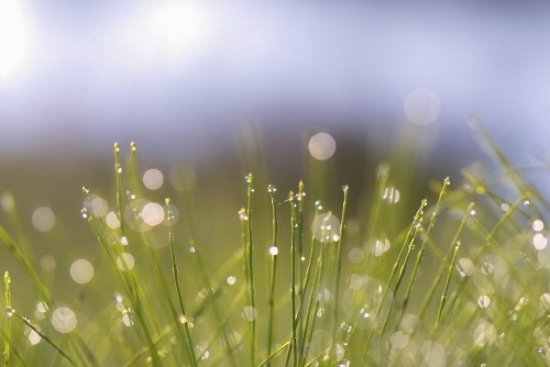 Flare-et-nature-simple-matinale.jpg