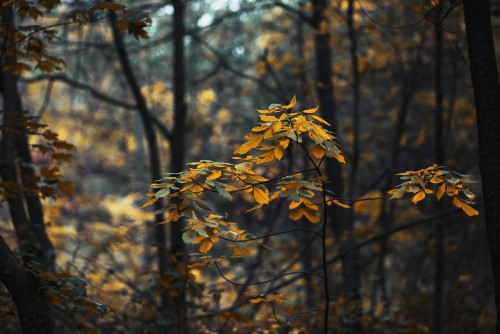 forest-leaves-changing-in-fall.jpg