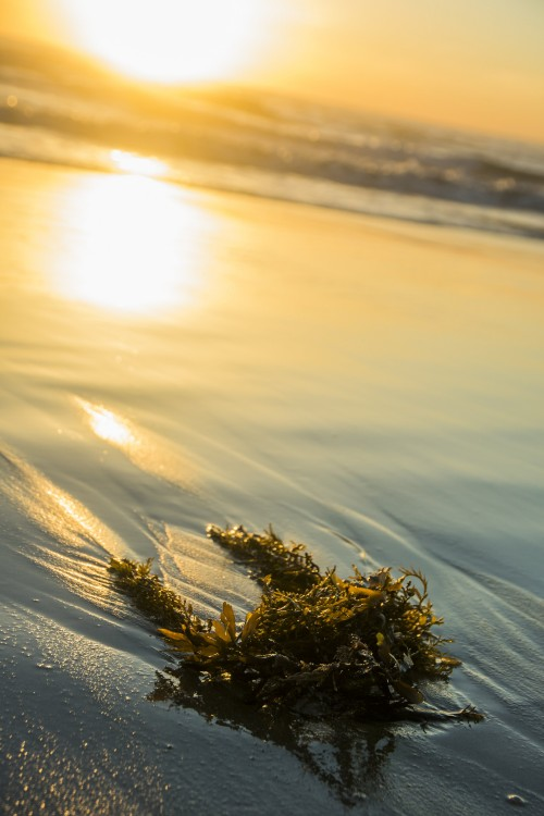 seaweed-washed-up-on-beach_4460x4460.jpg